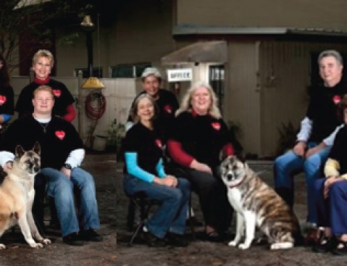 The Changing Face of Purebred Rescue