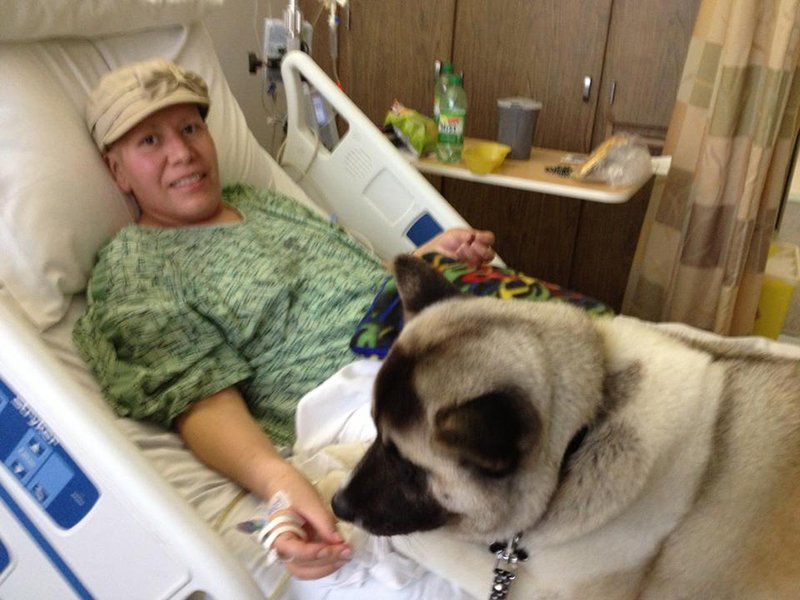 Therapy Akita visiting a patient at the hospital.